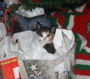 Kätzchen an Weihnachten 4 Lizenzfreies Stockfoto