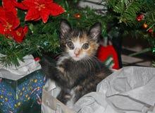 Kätzchen an Weihnachten 5 Stockfoto