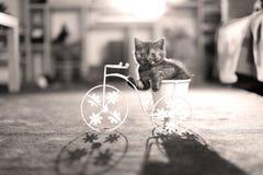 Kätzchen, welches das Fahrrad reitet stockbild