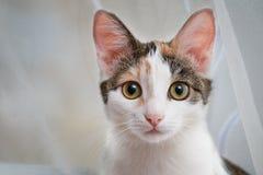 Kätzchen, welches die Kamera betrachtet lizenzfreie stockfotografie