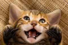 Kätzchen zeigt Tatzen, das Miauen und an zurück liegt lizenzfreie stockbilder