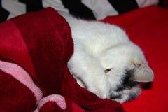 Kätzchen zufrieden gestellt wecken Lizenzfreie Stockfotos