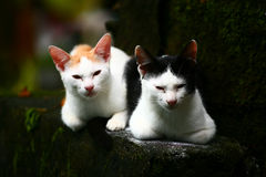 Kätzchen zwei Lizenzfreies Stockfoto