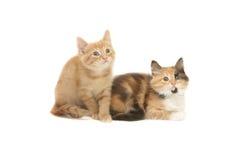 Kätzchen zwei, das aufwärts schaut stockbild