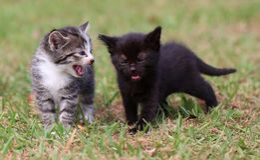 Kätzchen zwei tief im Gespräch Stockfotos