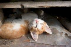 Kätzchen zwischen Paletten lizenzfreies stockbild