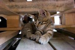 Kätzchen zwischen Paletten lizenzfreie stockfotografie