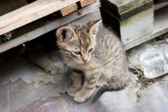 Kätzchen zwischen Paletten Stockfotos