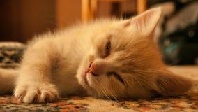 Kätzchen zzz lizenzfreie stockfotografie