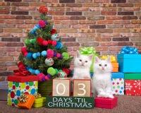 Kätzchencountdown zum Weihnachten 03 Tage Lizenzfreies Stockfoto