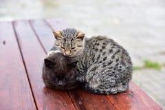 Kätzchenfrost auf der Straße lizenzfreie stockbilder