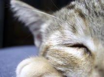Kätzchenliebe zum zu schlafen Stockfotografie