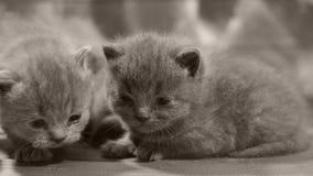 Kätzchenporträt auf einem hölzernen Hintergrund, Nahaufnahme stock video footage