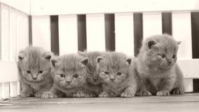 Kätzchenporträt auf hölzernem Hintergrund, weißer Zaun stock video