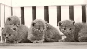 Kätzchenporträt auf hölzernem Hintergrund, weißer Zaun stock footage