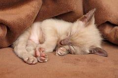 Kätzchenschlaf Lizenzfreie Stockbilder