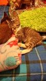 Kätzchenschlafen Lizenzfreie Stockfotos