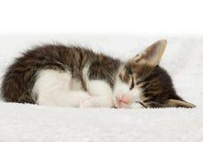 Kätzchenschlafen Lizenzfreies Stockfoto
