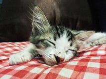 Kätzchenschlafen Stockbild
