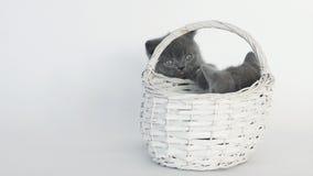 Kätzchenspiel im Korb stock video