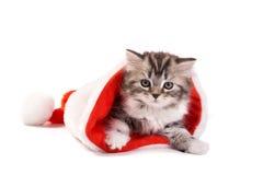 Kätzchenspiele auf einem weißen Hintergrund Lizenzfreie Stockfotografie