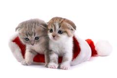 Kätzchenspiele auf einem weißen Hintergrund Stockfotografie