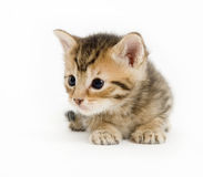 Kätzchenstillstehen Stockfotos