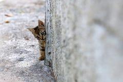 Kätzchenverstecken lizenzfreies stockfoto