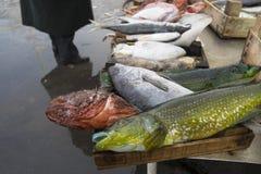 Käufer in einem Fischmarkt Stockfotografie