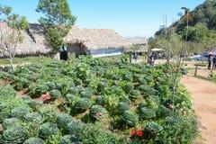 Kål i grönsakträdgården Royaltyfri Foto