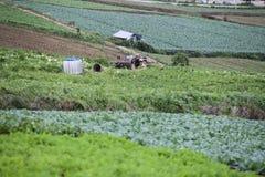 Kålgrönsak i utomhus- trädgård Royaltyfri Fotografi