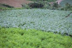 Kålgrönsak i utomhus- trädgård Royaltyfria Bilder