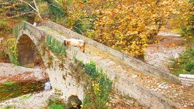 Kózki na moście w Vrosina wiosce w Ioannina Grecja zdjęcie stock