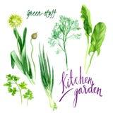 kök för underlagfennelträdgård Royaltyfri Bild