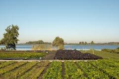 Kökträdgård, potager, grönsakträdgård, på banken av en liten sjö i sommar royaltyfri foto
