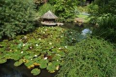 Köln, japanese garden. Japanese garden in Köln royalty free stock image