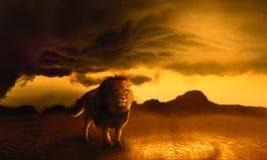 König Lion Lizenzfreie Stockfotos