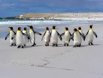 König Penguin Group, Aptenodytes patagonica, auf dem weißen sandigen Strand des freiwilligen Punktes, Falkland/Malvinas stockfotos