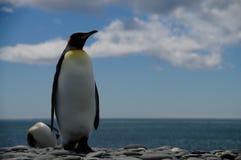 König Penguins auf Salisbury-Ebenen stockbild