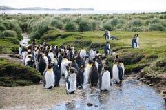 König Penguins auf Salisbury-Ebenen lizenzfreie stockbilder
