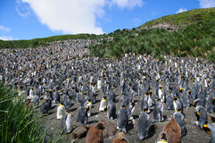 König Penguins auf Salisbury-Ebenen lizenzfreies stockfoto