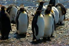 König Penguins in Grytviken Lizenzfreies Stockbild