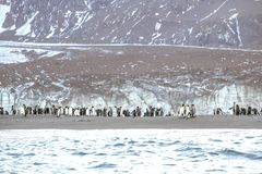 König Penguins nahe einem Eisberg bei Süd-Georgia lizenzfreie stockfotografie