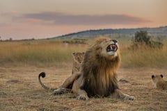 König und sein Sohn lizenzfreie stockfotografie