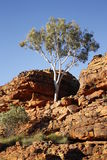 Könige Canyon NT Australien Stockfotografie