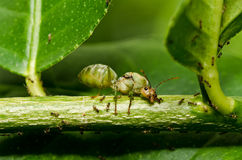 Königinameise in der grünen Natur Stockbilder