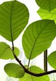 Königliche botanische Gärten Kew, UNESCO-Bauerbe, Kew West-London, botanische Gärten lizenzfreies stockfoto