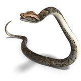 Königliche Pythonschlange vektor abbildung