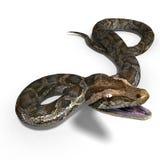 Königliche Pythonschlange lizenzfreie abbildung