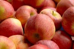 Königlicher Apfel Lizenzfreie Stockfotografie